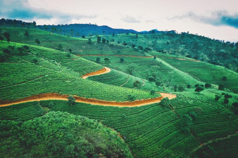 Lalantha - rizière